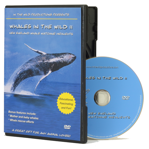 Whales in the Wild 2 DVD