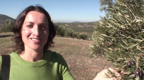 Supply Chain Ingredient Sourcing Video Badger Olive Oil