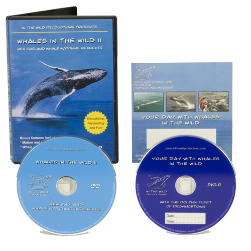 whale watch trip video special