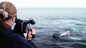 Summer Job Filming Whales on Cape Cod